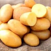 Продам картофель сорт Белароса