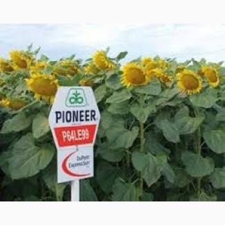 Семена подсолнечника Пионер P64LE99 Pioneer