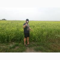 Горчица Сидераты смесь