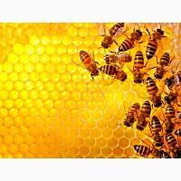 Продам 600 кг сонячникового меду 40 грн/кг