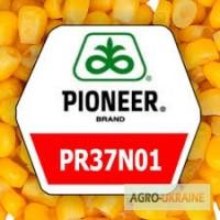 Кукурудза ПР37Н01 Pioneer посівний матеріал