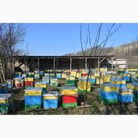 Продам бджолопакети української степової породи в кількості 100 шт, ціна договірна