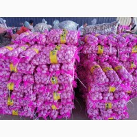Wholesale fresh garlic