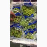 Продам свіжий виноград сорт Tompson (Індія)