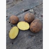 Продам посадочный картофель
