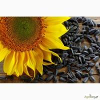 Куплю соняшник олійний