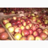 Продажа яблок для экспорта
