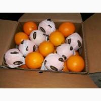Апельсин Валенсия прямые поставки Египет, Orange Valencia