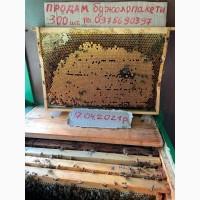 Бджолосім'ї карпатських бджіл доставка