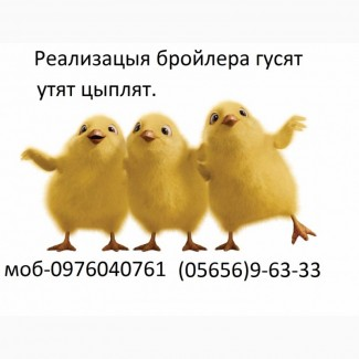 Реализуем курчат бройлера КОББ-500, РОСС-308, испанка. рэдбро, мастер