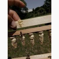 Продам пчеломатки карпатки