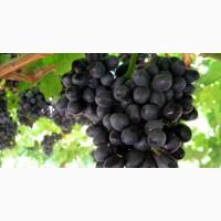 Продажа винограда на опт