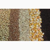 Закупаем разные зерновые культуры. (пшеница, рапс, соя, лен)
