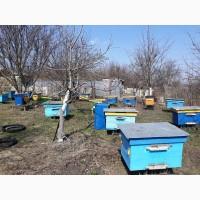 Продам пчел. Семьи, Харьковская обл