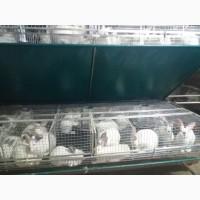 Продам тушки кроликів