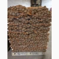 Продам Картоплю (Польща)м.Lodz Оптом 21т