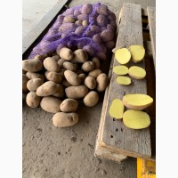 Продам семенную 2 репродукция и продовольственную картошку хорошего качества