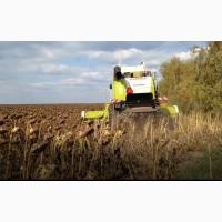 Уборка льна сои подсолнечника соняшника кукурузы Зеленодольск Днепр Каменское Кривой Рог