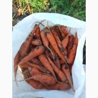 Морковь на переработку 2 сорт