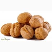 Куплю грецкий орех: целый, ядро Дорого