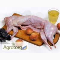 Продам мясо кролика домашнего Киев