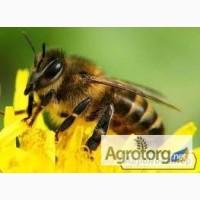 Продам бджіл