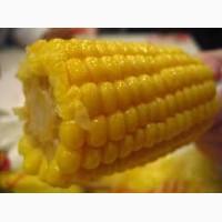 Закупка кукурузы.Крупный Опт.Есть Самовывоз
