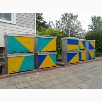 Продам українські вулики
