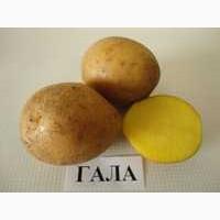 Продам посевную картошку