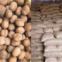 Продаю орех грецкий