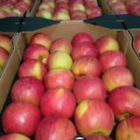 Закупаем Яблоки первого сорта