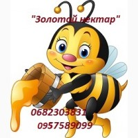 Закупаем мед урожая 2019-2020 года