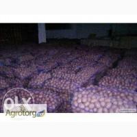 Продажа картофеля со склада в Днепропетровске