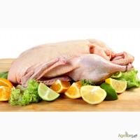 Приймаються заявки на придбання тушок французької качки кросу Мулард, Стар 53 та Мускус