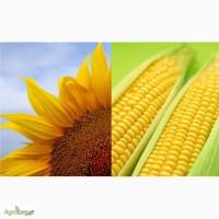 Продам Семена Кукурузы и Подсолнечника G-Host (КАНАДА)