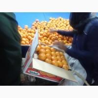 Поставки мандаринов из Пакистана. Самая низкая цена на оптовом