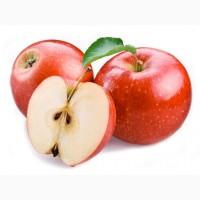На постоянной основе покупаем яблоко оптом. На переработку и подбор Не Интересует