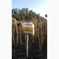 Продам семена подсолнуха Пиоенр ПР64ЛЕ25, П64ЛЕ99 ПР64Е71