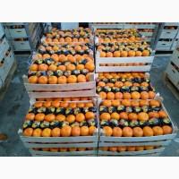 Продам мандарины, Турция оптом