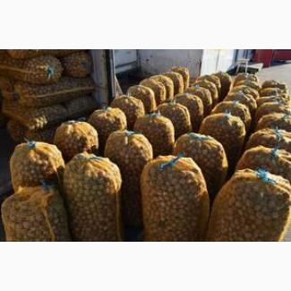 Экспортируем Грецкий орех - вольский. Доставка. Делаем затаможку. 1, 2 сорт, кругляк 28