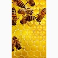 Продам бджололосім'ї