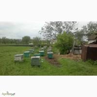 Пчелосемьи с медом в ульях лежак