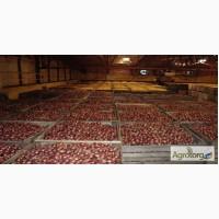Продажа овощей по оптовым ценам со склада
