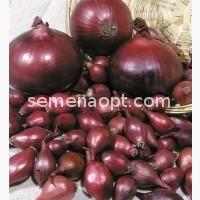 Лук-севок Ред Барон фиолетовая-красная слабо-острый