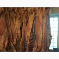 Продаем говядину и суппродукты