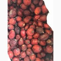 Продам шиповник (ягоды)