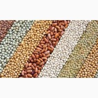 Куплю пшеницу, кукурузу, сою, рапс, сорго, овёс