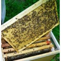 Продаються бджолопакети