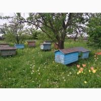10 сильних бджолосімей в вуликах повних меду