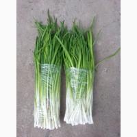 Продам зелёный лук на перо